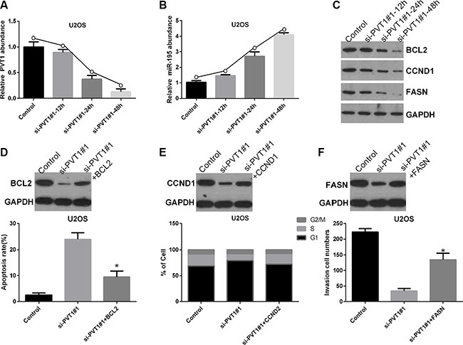 Silencing PVT1 by siRNA suppresses BCL2, CCND1, and FASN protein expression via miR-195 in osteosarcoma cells.