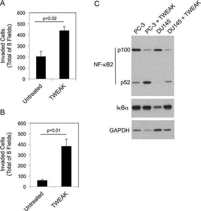 TWEAK treatment of human PC-3 and DU145 prostate cancer cells increases invasion and activates the non-canonical NF-κB pathway.