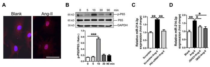 Up-regulation of microRNA-214-3p (miR-214-3p) in mouse myofibroblasts through NF-kB pathway.