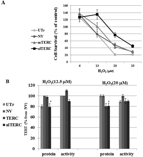 alTERC protects NSC-34 cells from oxidative stress without affecting TERT expression.