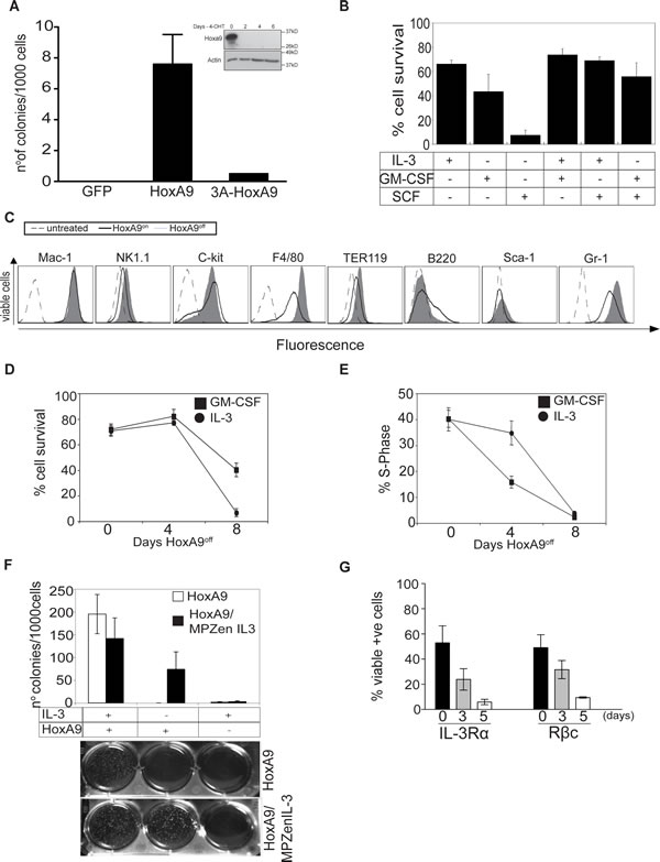 HoxA9 overexpression is required for proliferation and survival of growth factor dependent myeloid cells.