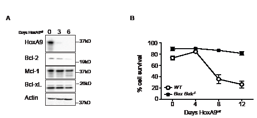 Decline in Bcl-2 expression in HoxA9-dependent myeloid cells is independent of apoptotic cell death.