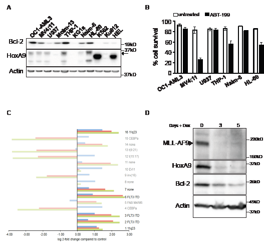 Association between HoxA9 and Bcl-2 expression in human leukemic lines.