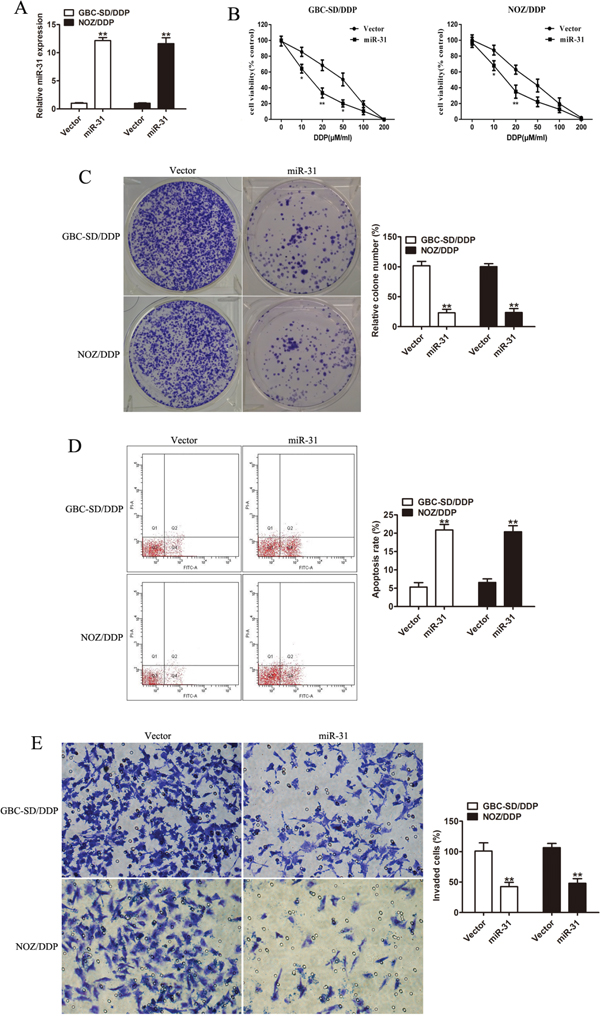 Effect of miR-31 on cisplatin sensitivity and invasion capacity of DDP-resistant cells.