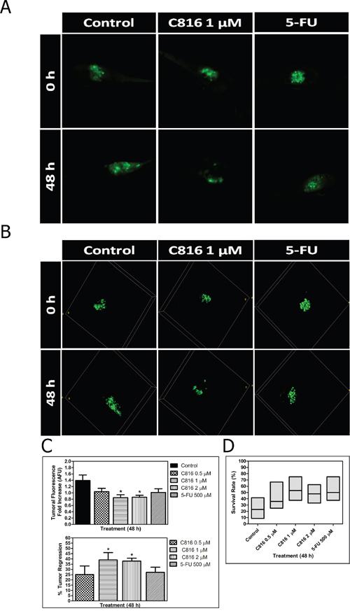 Crambescidin 816 induces tumor regression in an in vivo colorectal carcinoma model.