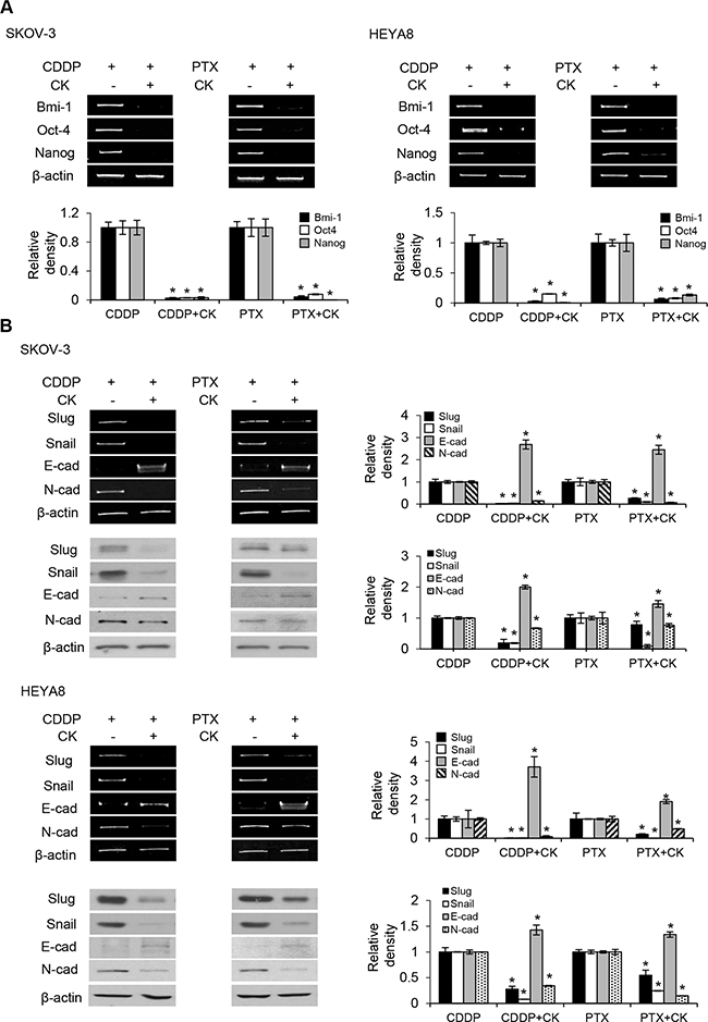 Compound K chemosensitizes CSCs via EMT.