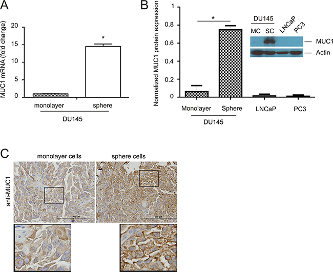 Upregulation of MUC1 in prostate cancer stem-like cells (PCSLCs).