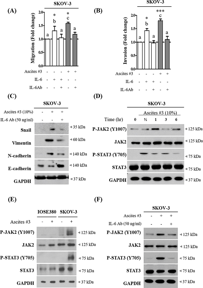 IL-6 in ovarian cancer patient derived ascites increase migration and invasion of SKOV-3 cells via JAK2-STAT3 signaling.