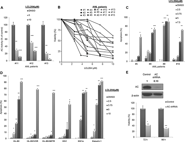 AC inhibition reduces viability and increases apoptosis in AML patient blasts and human AML cell lines.