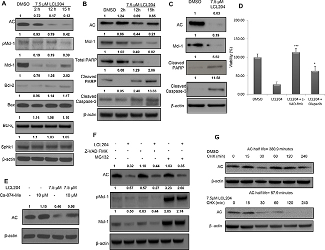 AC inhibition induces apoptosis, decreases pro-survival proteins and downregulates AC and Mcl-1.