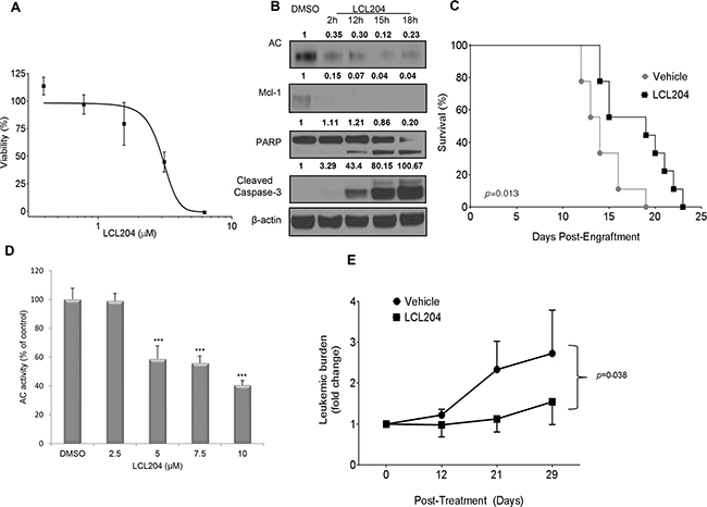 AC inhibition increases survival in a murine AML model and decreases leukemic blasts in a primary human AML xenograft model.