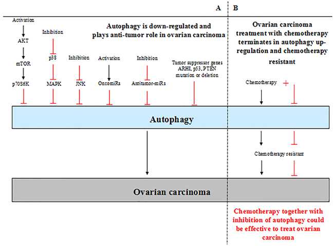 A. Autophagy plays dual roles in ovarian carcinoma.