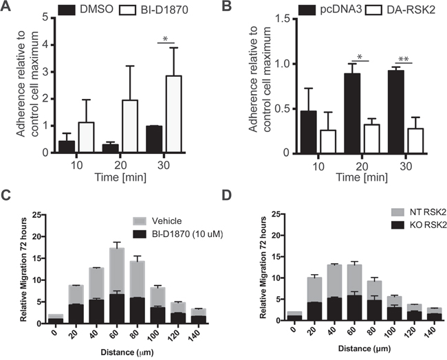 RSK2 activity reduces cell adhesion to fibronectin and invasion into brain slices.
