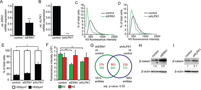 siRNA knockdown of ERN1 and ALPK1 enriches for a luminal cell type.
