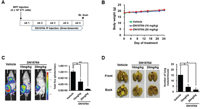 DN10764-meidated suppression of breast cancer metastasis.