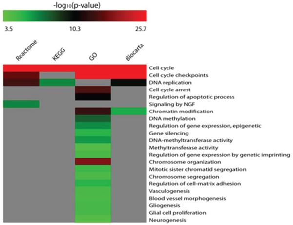 Matrix of enriched biological functions within the biological networks of DE miRNAs targets.