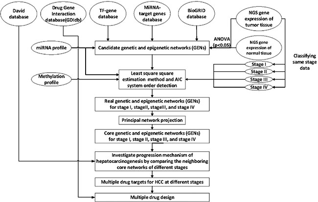 Overview of the construction of genetic and epigenetic networks (GENs) and core GEN to analyze the mechanism of hepatocarcinogenesis progression and multiple-drug design, via big database mining and system identification.