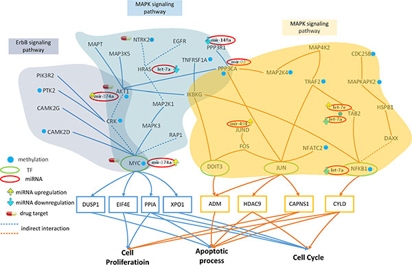 Effect of miRNA regulation and DNA methylation on the mechanism of progression of HCC from stage I to stage II.