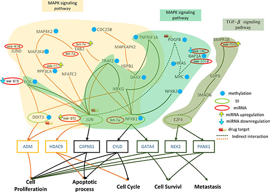 Role of miRNA regulation and DNA methylation on the mechanism of progression of HCC from stage II to stage III.