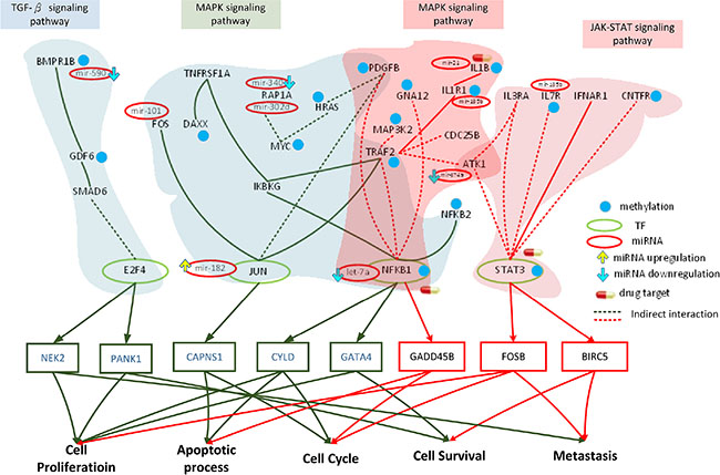 Role of miRNA regulation and DNA methylation on the mechanism of progression of HCC from stage III to stage IV.