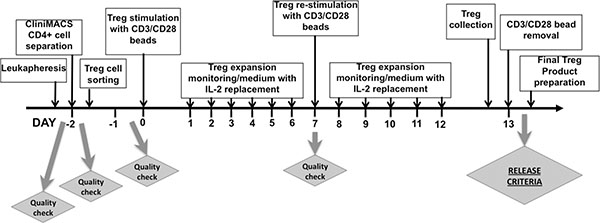 Timeline of Treg isolation and ex-vivo expansion.
