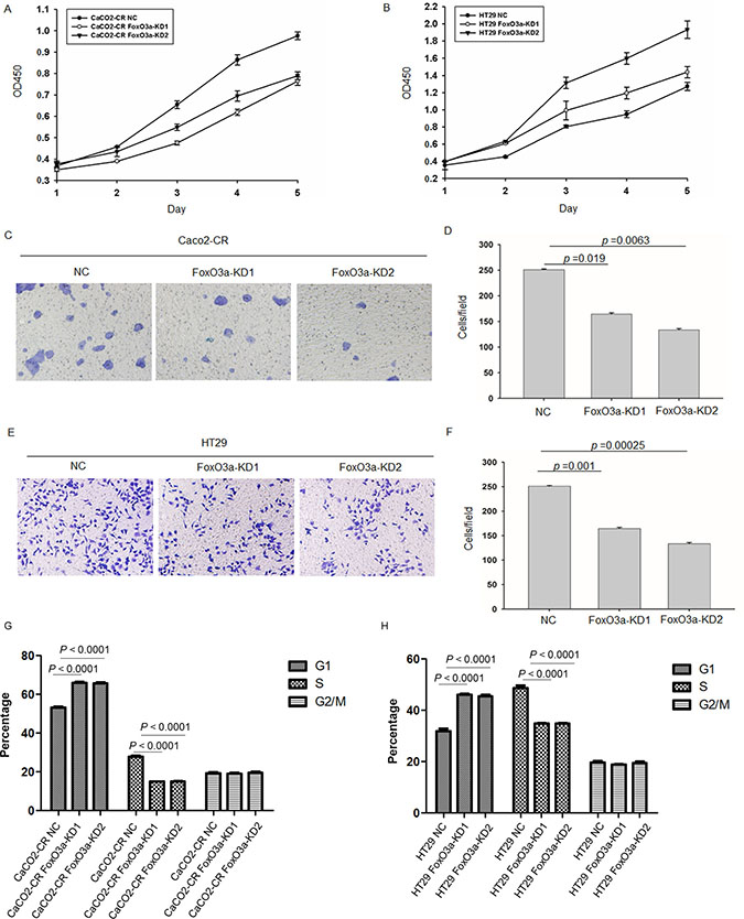Knockdown of FoxO3a inhibited cell proliferation and migration ability in cetuximab resistant CRC cells.