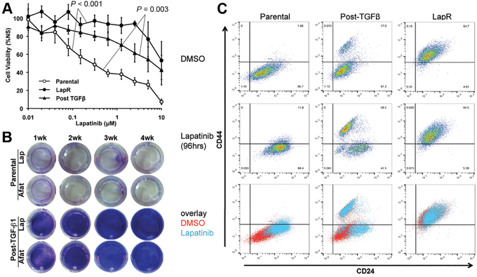 TGF-β-induced EMT primes cells to be inherently drug resistance.