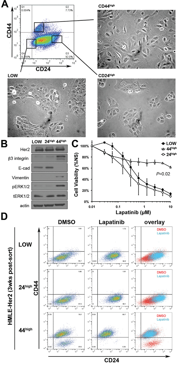 Her2 inhibition only targets a CD44low/epithelial cell population.