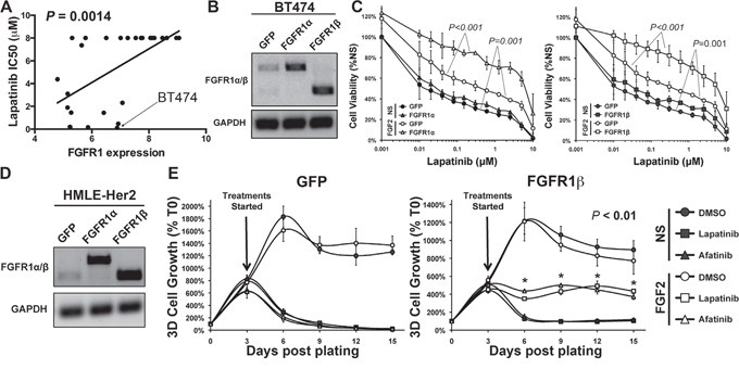 FGFR1:FGF2 signaling is sufficient to drive resistance to ErbB inhibition.
