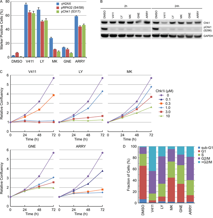 Various Chk1 inhibitors induce DNA damage and permanent DNA damage-induced cell cycle arrest.