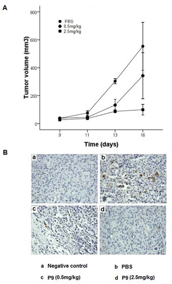 Synthetic P9 peptides inhibit the growth of the murine melanoma B16-F10 cells in mice.