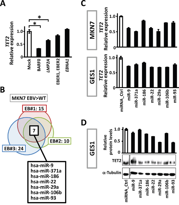 Viral and cellular factors to downregulate TET2.