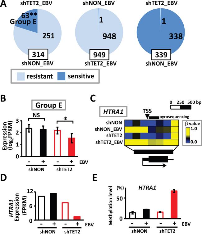 Methylation acquisition in methylation-resistant genes in shNON_EBV.