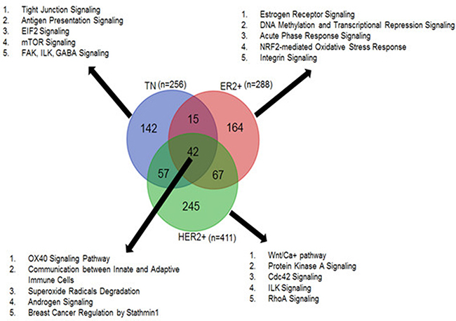 Tumor-specific circRNAs common and unique to TN, ER+ and HER2+ subtypes and the top canonical pathways associated with each subtype.
