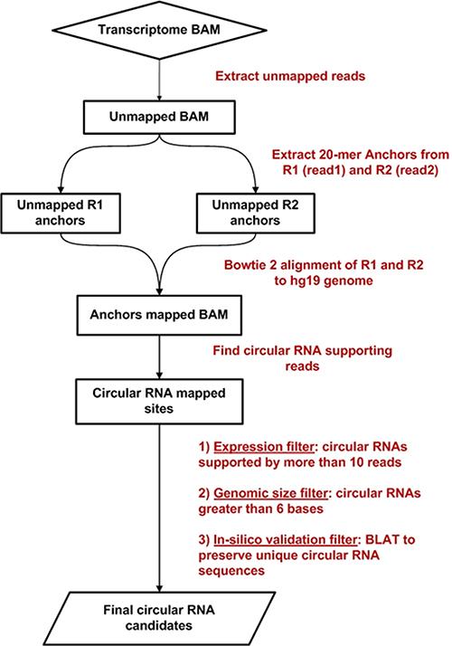 Circ-Seq bioinformatics workflow flowchart.