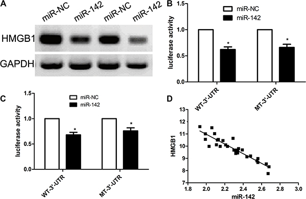 HMGB1 is a direct target of MiR-142 in cervical cancer cell lines.