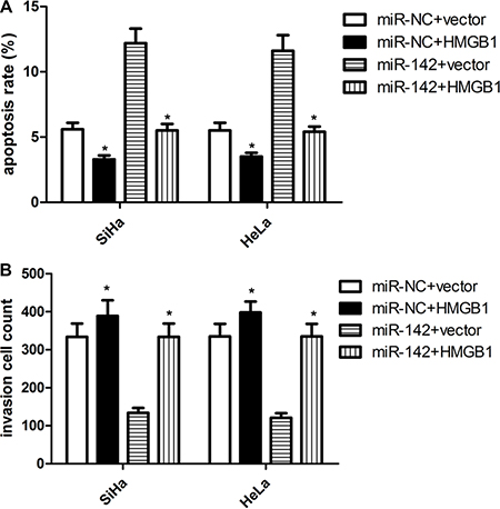 HMGB1 over-expression attenuates the suppressive effect of miR-142 on cell apoptosis and invasion.