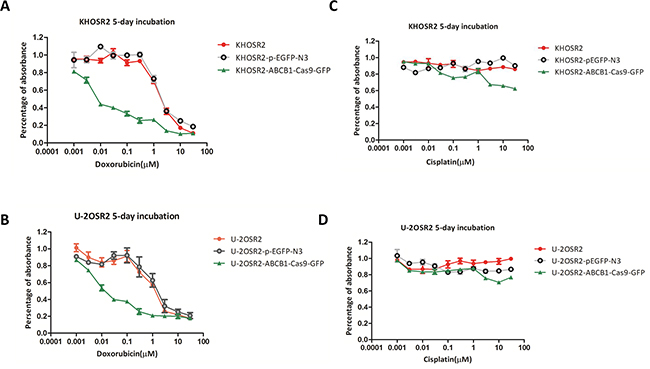 After ABCB1 was knocked out by CRISPR-Cas9, doxorubicin exhibited an increase in anti-proliferative activity in MDR osteosarcoma cell lines in a dose-dependent manner