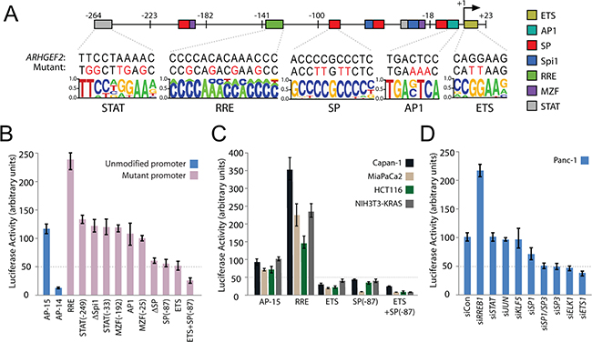 Identification and validation of transcription factors regulating the minimal ARHGEF2 promoter.