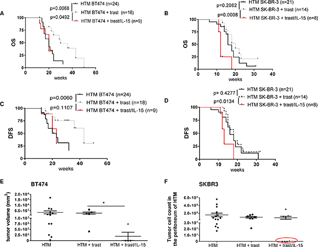 IL-15 immunostimulation influences the outcome of trastuzumab treatment in HTM.