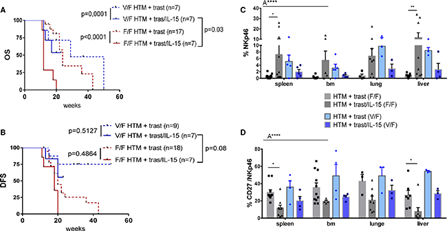 Influence of the FcgRIIIA genotype on NK-cell population and the overall outcome in IL-15-treated HTM.