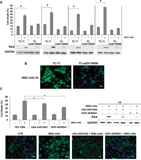 IGF-1R expression and activity are required for CD99-mediated methuosis.
