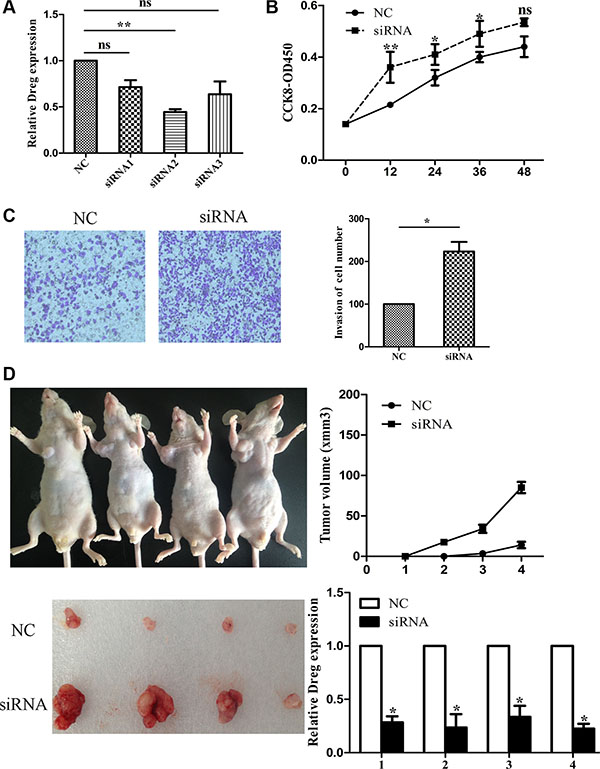 LncRNA AF147447 inhibition promote GC proliferation and invasion in vitro and in vivo.