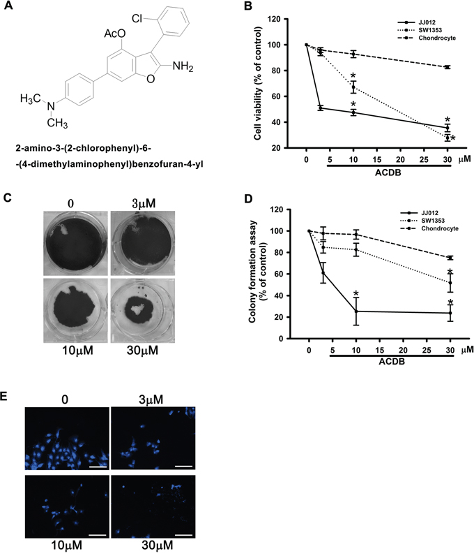 The effect of ACDB on cell viability and formation and colony assay in human chondrosarcoma cells.
