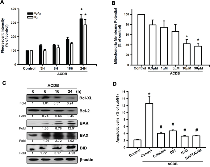 ACDB induces ROS production and mitochondrial dysfunction in human chondrosarcoma cells.