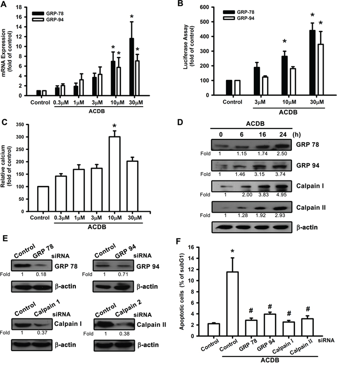 ER stress-related proteins activation are involved in ACDB-mediated cell apoptosis in human chondrosarcoma cells.