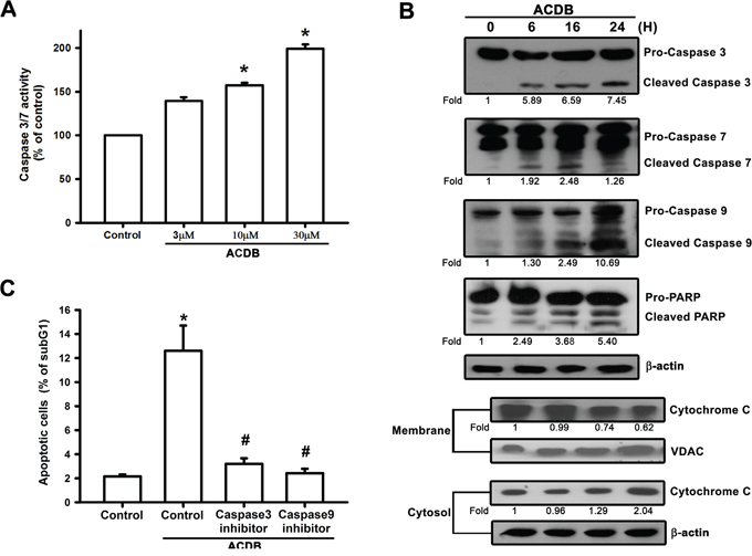ACDB induces the activation of caspase in human chondrosarcoma cells.