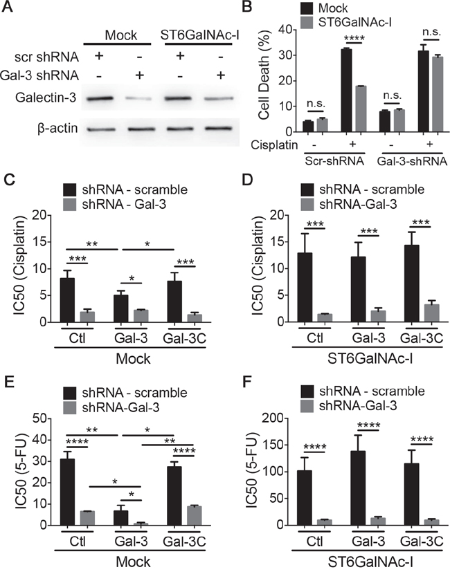 Intracellular galectin-3 protects cells from chemotherapeutic-induced cytotoxicity.
