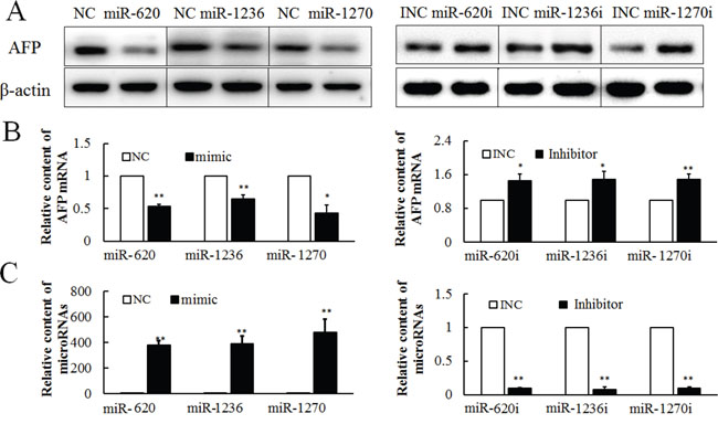 Effect of miR-620, miR-1236 and miR-1270 on the expression of AFP in PLC/PRF/5 cells, as evaluated by western blotting or qRT-PCR.