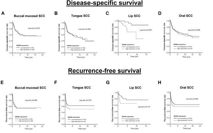 The Kaplan-Meier curves for disease-specific survival and recurrence-free survival with different levels of DDX60 expression in patients with BMSCC (A, E), TSCC (B, F), LSCC (C, G) and OSCC (D, H).